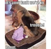 Funny Dog And Baby Meme  Jokes Memes &amp Pictures