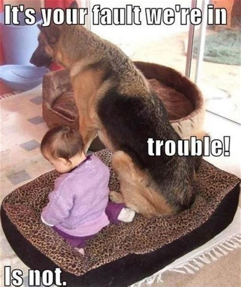Baby Animal Memes - funny baby animal memes funny dog and baby meme