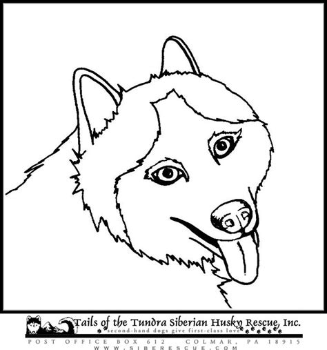 siberian husky coloring book stress relief coloring book for grown ups animal coloring book books sled coloring pages to print coloring pages