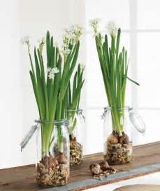 Paperwhite Flowers I Fiori Flowering Plants And Bulbs For Forcing