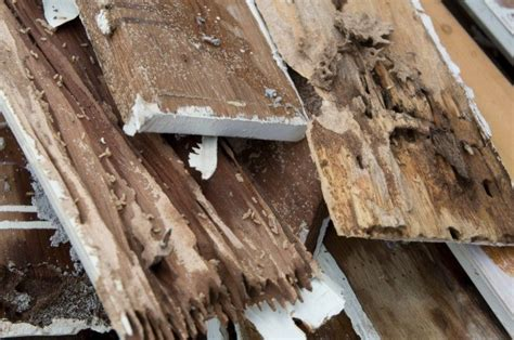 Buying A House With Termites 28 Images The Cost Of Termite Damage Cure All Pest