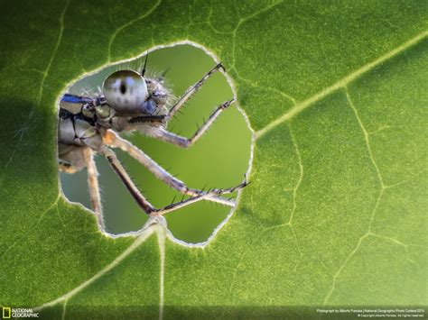 imagenes sorprendentes de natgeo las mejores fotograf 237 as del national geographic photo