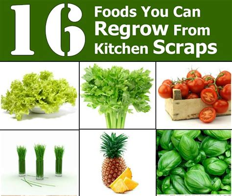 home design 16 kitchen scraps 16 foods you can re grow from kitchen scraps home and gardening ideas