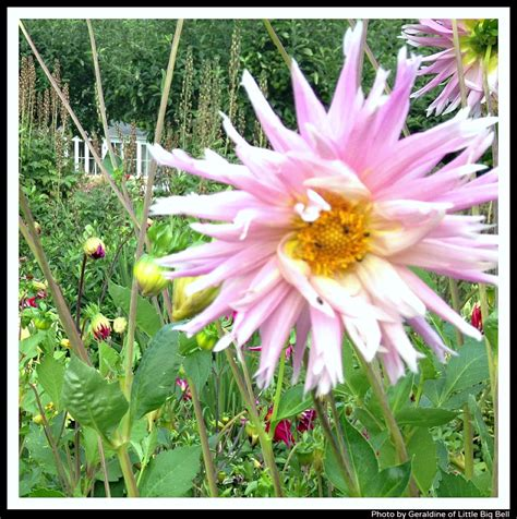 littlebigbell pythouse walled garden flowers photo by
