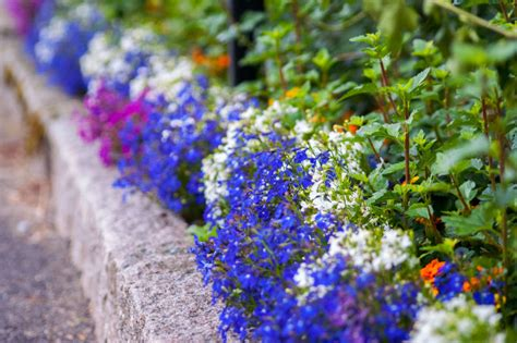 how to kill grass in flower beds how to kill grass in flower beds 28 images welcome