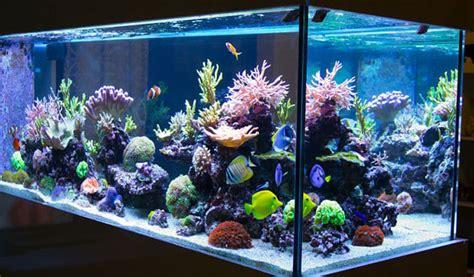 acuarios en casa c 243 mo alimentar a los peces de un acuario en casa