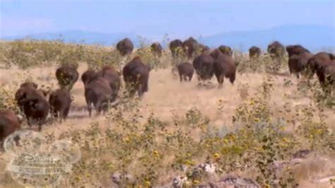 watch online buffalo dreams 2005 full movie official trailer buffalo dreams ending youtube