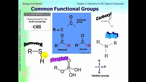 3 carbohydrates groups ap biology ch 3 part 1 functional groups and carbohydrates
