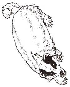 badger color pin badger printables on