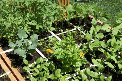 square vegetable garden how to make an vegetable garden city vegetable garden
