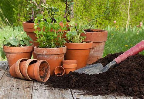 cura delle in vaso piante da vaso resistenti al gelo