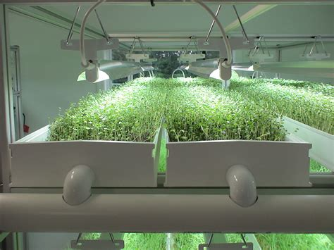 growing microgreens   nft hydroponic system growers