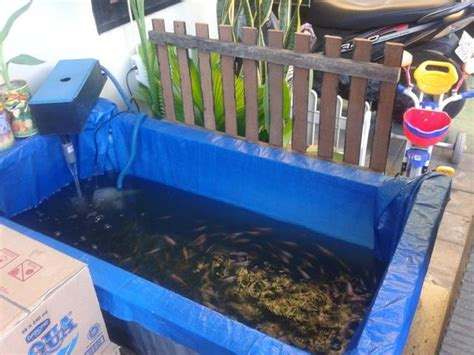 Jual Kolam Terpal Ikan Nila kolam ikan bahan terpal bikinan sendiri murah meriah