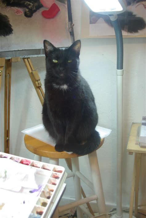 Cat Black Stool by Daily Photo Reprise Something Familiar About That Black