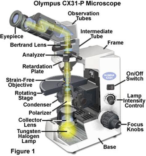 polarized light microscopy cx31 p polarized light