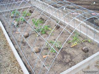 raised bed tomato trellis the best way to grow tomatoes gardenerscott