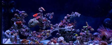 Aquascape Ideas Reef Tank by Pin By Sonny Carabes On Here Fishy Fishy