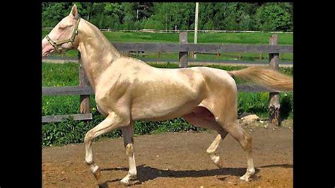 fotos de penes super finos los 10 caballos mas caros que no creer 225 s que existen youtube