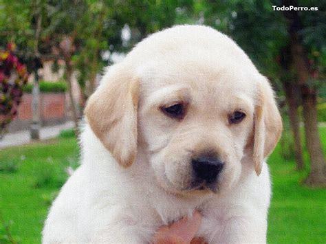 imagenes de animales lindos imagenes de perros lindos taringa