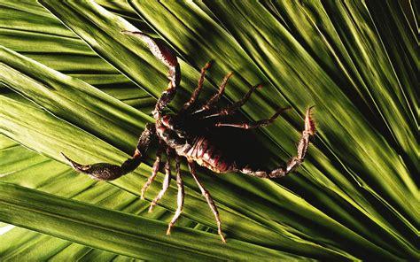 skorpion blatt scorpio leaf scorpion nature focus