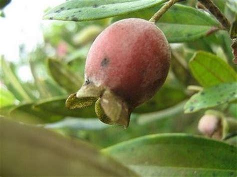 gambar buah2an