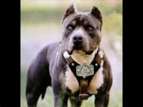 badass dogs top ten badass dogs