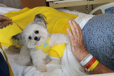 norbert the meet norbert the adorable therapy who is providing and support to those