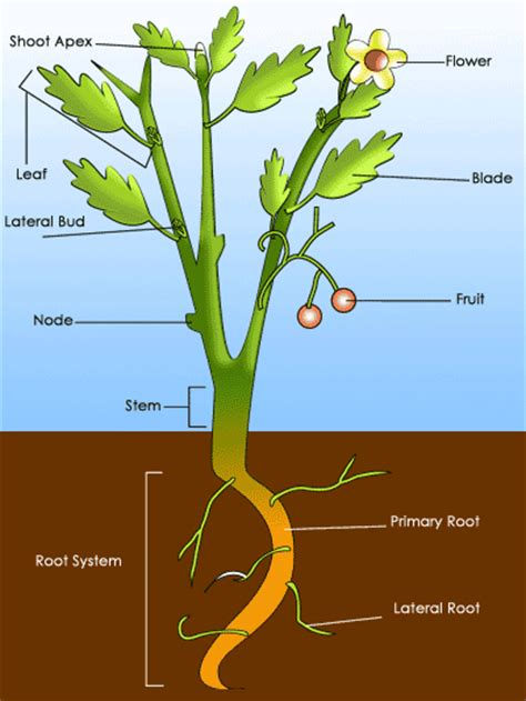 sparknotes characteristics of plants common plant characteristics
