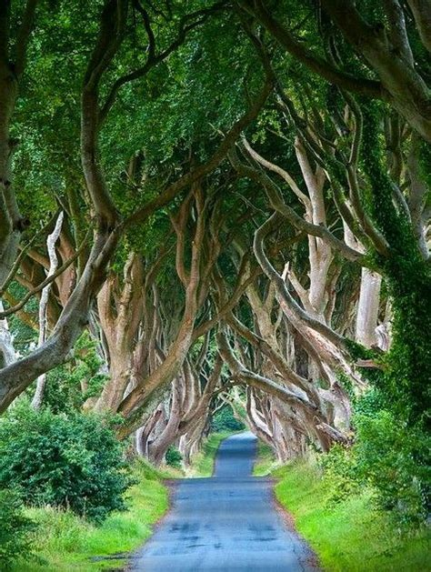the list 101 places to see in ireland before you die books the hedges northern ireland 101 most beautiful
