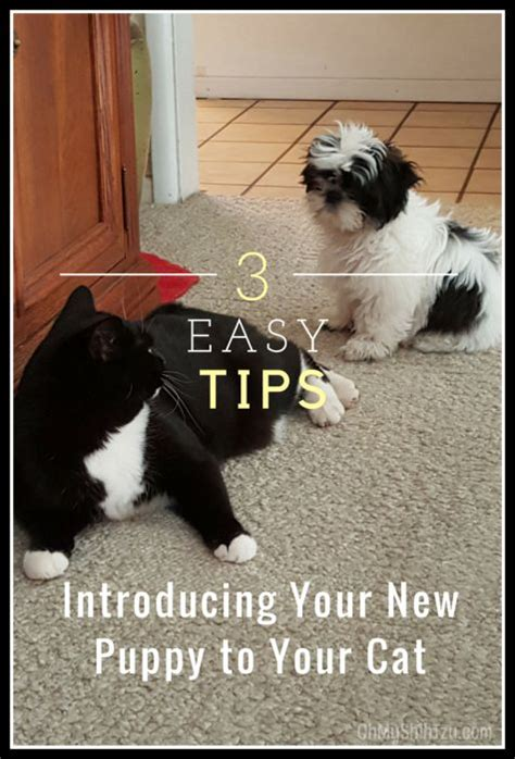 introducing a new puppy to your 17 best ideas about new puppy on new puppy