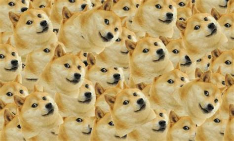 doge    agree    pronounce  internet