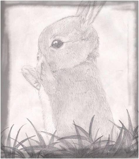imagenes de dibujos a lapiz hermosos espectaculares dibujos de conejitos a lapiz imagenes de