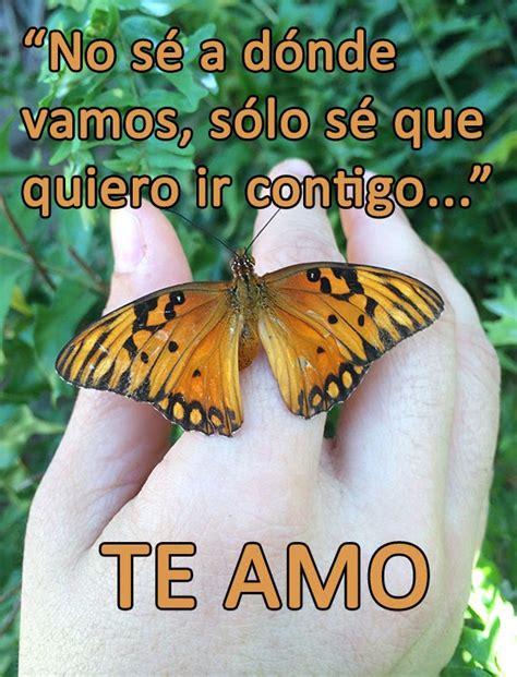 Frases Con Mariposas Imagenes | naturaleza tropical frases de amor con fotos de mariposas