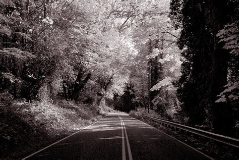 Autumn Black road through autumn black and white photograph by