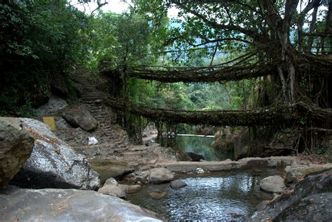 living bridges file a double decker living bridge in meghalaya december
