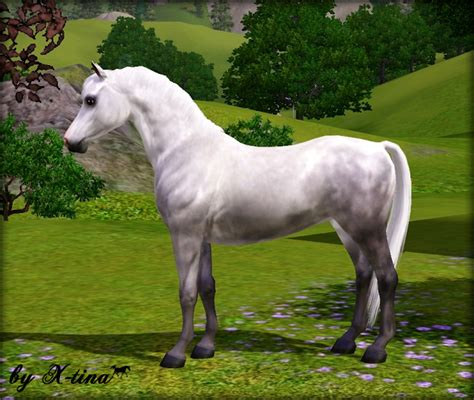 welsh pony section a exquisite arabians welsh pony section b v 2
