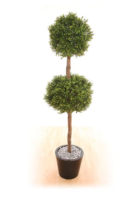 topiary care topiary tree care image mag