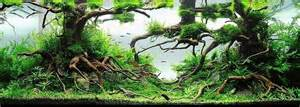 driftwood aquascape more hobbies the beginning