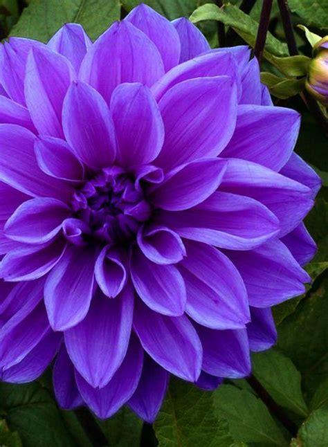 plant with purple flowers best 25 purple flowers ideas on pinterest purple lilac