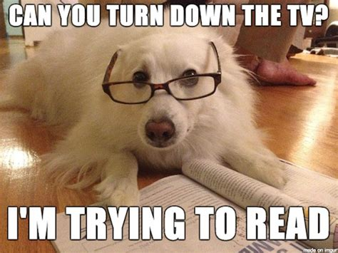 Reading Memes - 5 times science proved that dogs are smarter than we