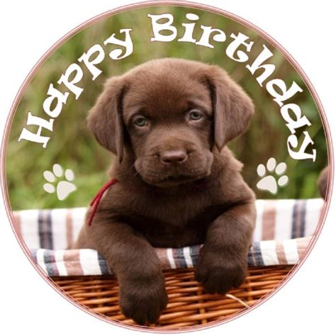 puppies happy birthday wish you a happy birthday puppy image