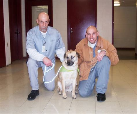 puppies for parole fcc participates in puppies for parole program daily journal news