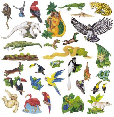 printable rainforest animal pictures michelle s biology 4 1 ecosystems
