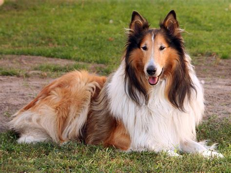 best dogs for protection best dogs for and protection pet photos gallery nwmknrgk7o