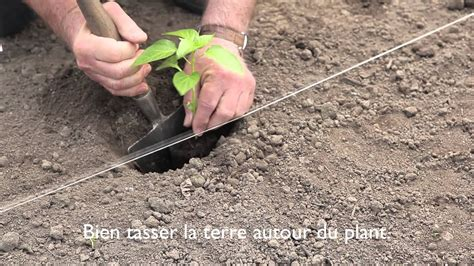 Plantation Aubergine Et Poivron by Semis Piments Et Poivrons