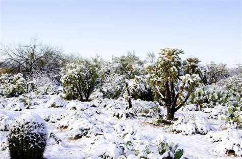 desert snow desert snow in february photograph by michael moriarty