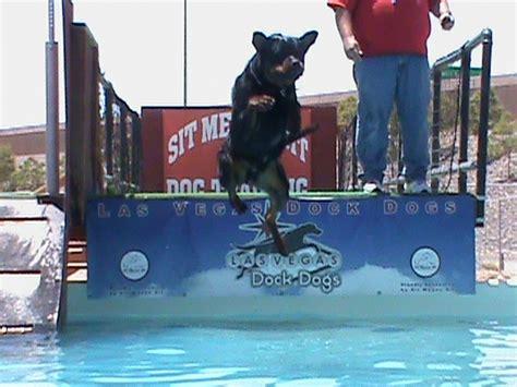 rottweiler puppies boise idaho rottweiler dock diving practice in boise boise