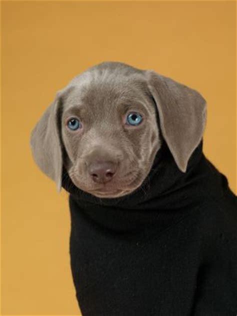 march puppies wegman world