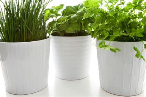 vasi erba coltivare l erba cipollina in vaso pollicegreen