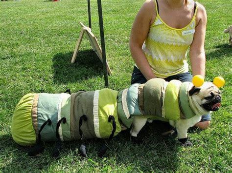 best pug costume pugapillar pugs pug and caterpillar